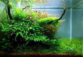 Nature Aquascape Planted Tank Natural Mystic By Alejandro Meneses Aquarium Design