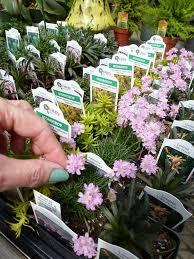 1280 best fairy u0026 miniature gardens images on pinterest fairies