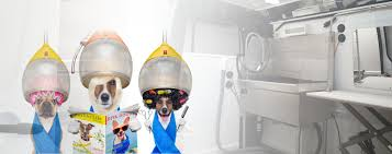 mobile dog grooming orlando dazzling dogs mobile salon