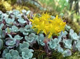 Fall Garden Plants Texas - xeriscape texas native plants for drought tolerant resistant design