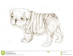 english bulldog sketch pictures to pin on pinterest pinsdaddy