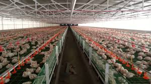 free poultry farming business plan 16 with free poultry farming