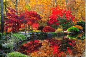 autumn leaves beauty change janet hagerman