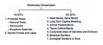 conservations of biodiversity in situ conservation and ex situ