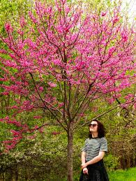 fast growing trees for sale low grower prices fast shipping