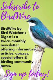 52 best watching backyard birds images on pinterest backyard