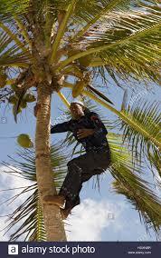 australian native climbing plants native palm trees stock photos u0026 native palm trees stock images