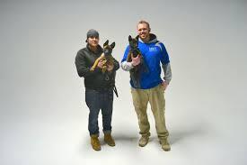belgian shepherd malinois pronunciation belgian malinois michigan dog training