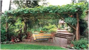 australian native edible plants backyards wonderful 44 edible garden plants australia amazing