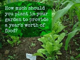 how much should you plant in your garden to provide a year u0027s worth