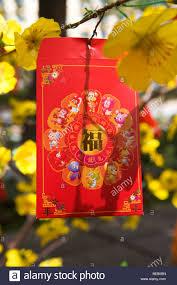 tet envelopes a li xi or envelope hanging from an apricot tree during tet