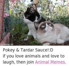 Tardar Sauce Meme - 02013 grumpy cat pokey tardar sauce d if you love animals and love