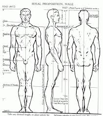 7 tutorials on how to draw the human anatomy body figure