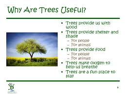 let s learn about trees ppt