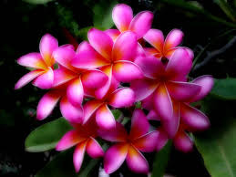 Hawaiian Flowers And Plants - pictures of flowers hawaii flowers hawaii travel hd pictures