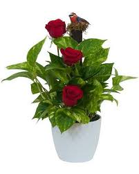 sympathy plants sympathy plants delivery ypsilanti mi norton s flowers gifts