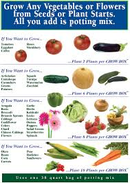 Types Of Vegetables To Grow In A Garden - what to grow the garden patch growbox