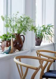 how to prune houseplants