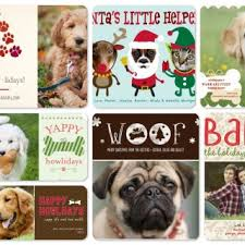 pet lover holiday photo cards dog cat christmas cute picture ideas