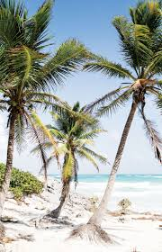 best 25 palm trees beach ideas on pinterest california palm tropical island adventures escape to a beach paradise soak in the sun palms ocean air free your wild see more untamed island inspiration