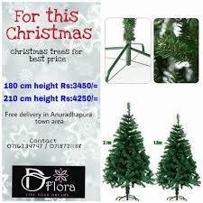 d flora home facebook