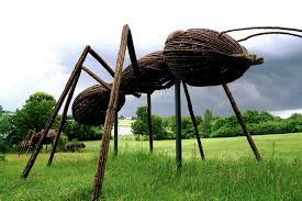 david rogers u0027 big bugs