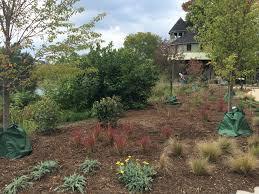 native plantings dominion power u0026 capital one volunteers complete cherry tree walk