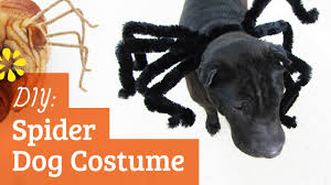 dog clothes for halloween diy spider dog costume halloween kin collab sea lemon youtube