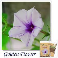 Cheap Flower Seeds - online get cheap unusual flower seeds aliexpress com alibaba group