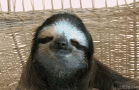 Angry Sloth Meme - funny sloth gif 9 gif images download