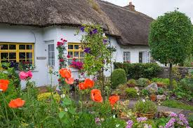 old fashioned cottage garden with various kind of cottage plants