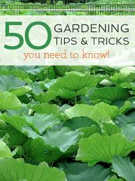 50 gardening tips and tricks with garden collage better after