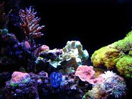 Aquascape Reef Tank Of The Month April 2009 Reefkeeping Com