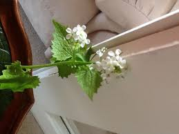 Weed Or Flower Pictures - weed or flower gardening forum gardenersworld com