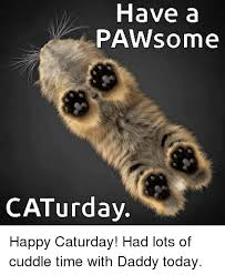 Caturday Meme - have a paw some caturday happy caturday had lots of cuddle time