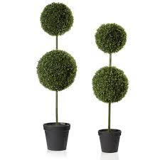 topiary trees box topiary trees dzd