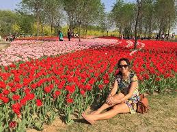 Tulip Field I Can U0027t Believe I U0027m Not In Holland U2013 Tulips In Beijing Slightly