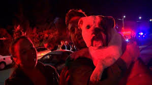 dog saves residents from apartment fire in seattle wjla