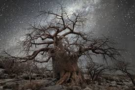 stunning images of the world s oldest trees lit up by the