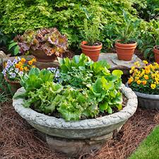 Potted Herb Garden Ideas Container Gardening Bonnie Plants