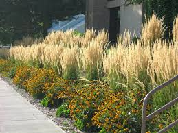 ornamental grasses in containers for privacy zone 5 screening