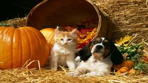 cute halloween kitten wallpaper halloween pets wallpaper wallpapersafari