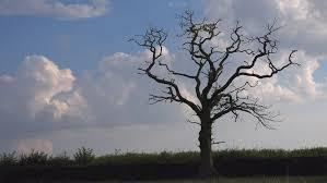 dead wood tree blue sky clouds stark landscape of gnarled