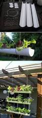 423 best small space gardening images on pinterest gardening