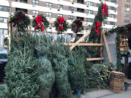 what type of christmas tree should you get in nyc streeteasy