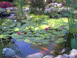 fish u0026 koi pond builder installer downers grove dupage county