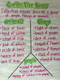 collective nouns u2026 collective nouns pinterest collective