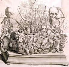 death science sexology joanna ebenstein of the morbid anatomy