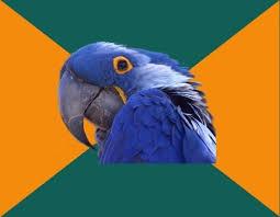 Paranoid Parrot Memes - create meme paranoid parrot mememypic com