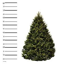 christmas tree delivery 7 ft balsam fir christmas tree hilltop christmas tree delivery